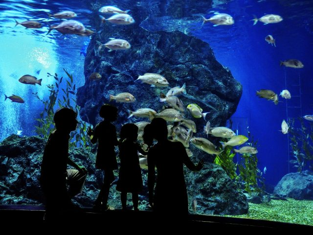 Silhouettes of family with two kids in oceanarium, looking at fishes in aquarium ; Shutterstock ID 242702614; Purchase Order: -